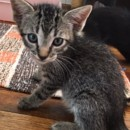 Photo of Merlin