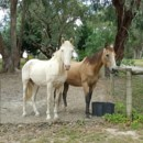 Photo of Sonny And Tia   Beautiful Horses