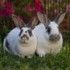 No photo for Prince Caspian And Crystal (Bonded Pair)