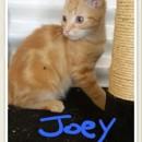 Photo of Joey Puss