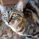 Photo of Tess