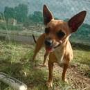 Photo of Jacinta
