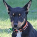 Photo of Puppy Sabé Dl1576