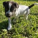 Photo of Dopey