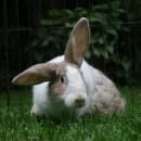Photo of Frieda