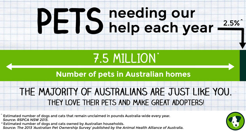 pets needing our help infographic