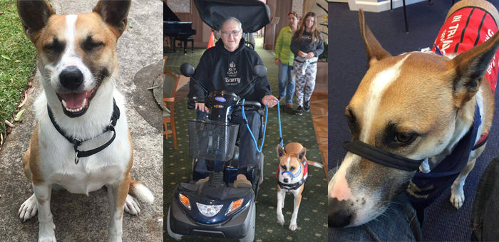 Miles is being trained to provide mobility assistance