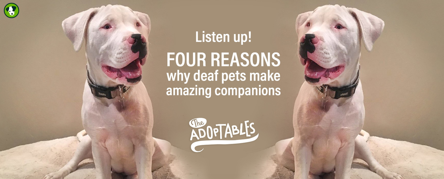 Four reasons deaf pets make amazing companions