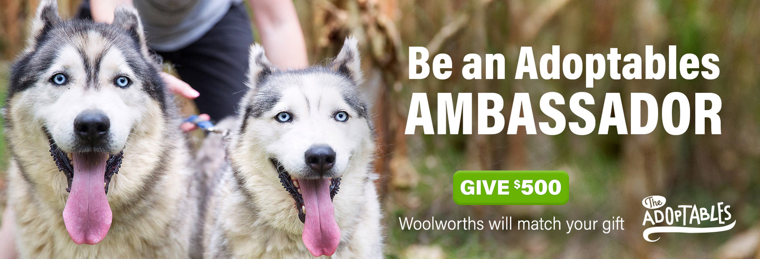 Be an Adoptables Ambassador