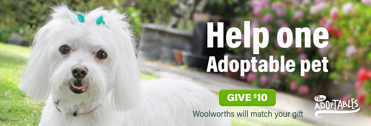 $10 helps one Adoptable pet