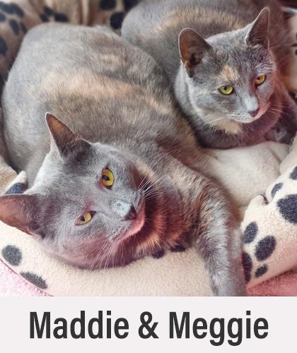 Maddie Meggie