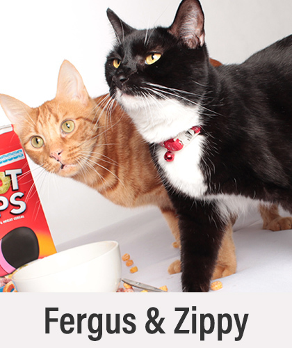 Fergus and Zippy