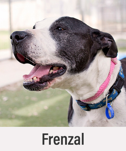Frenzal