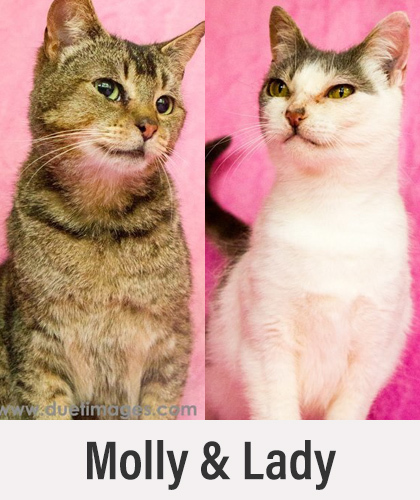 Molly and Lady