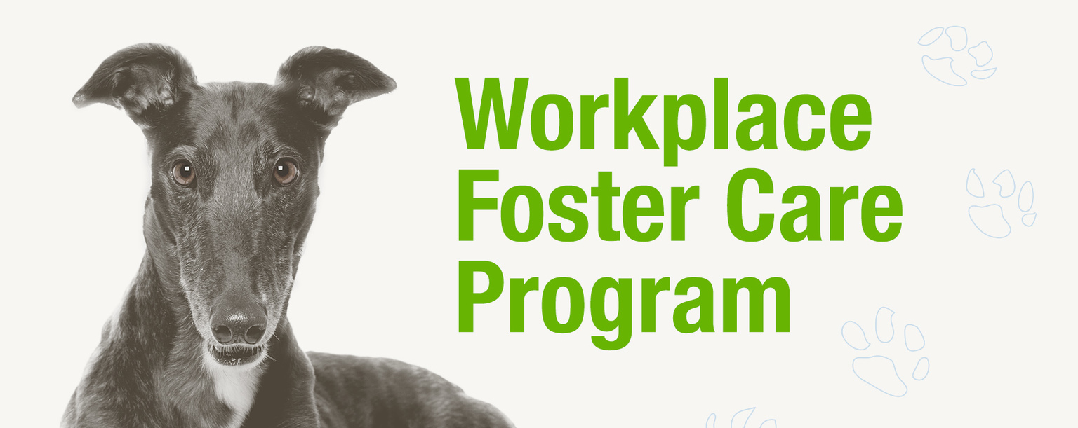 Workplace foster care rescue groups