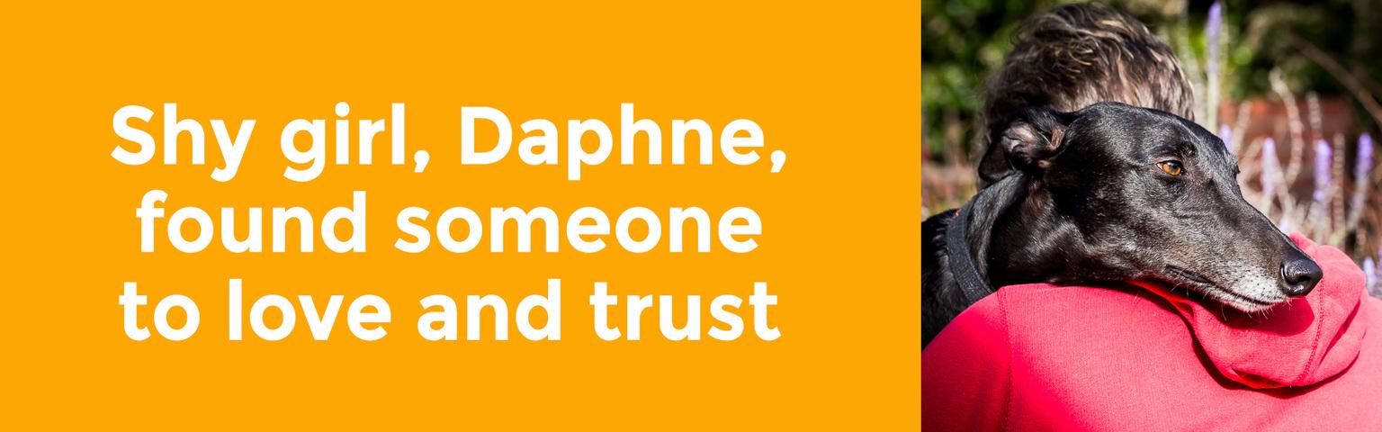 Daphne Adoptables