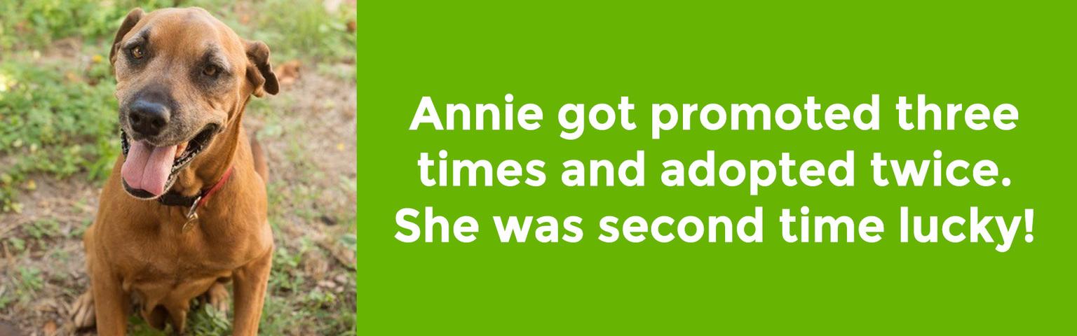 Annie Adoptables
