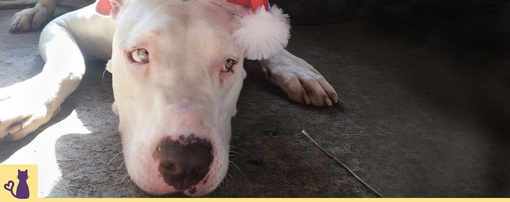 Council pound pet adoption PetRescue Camden