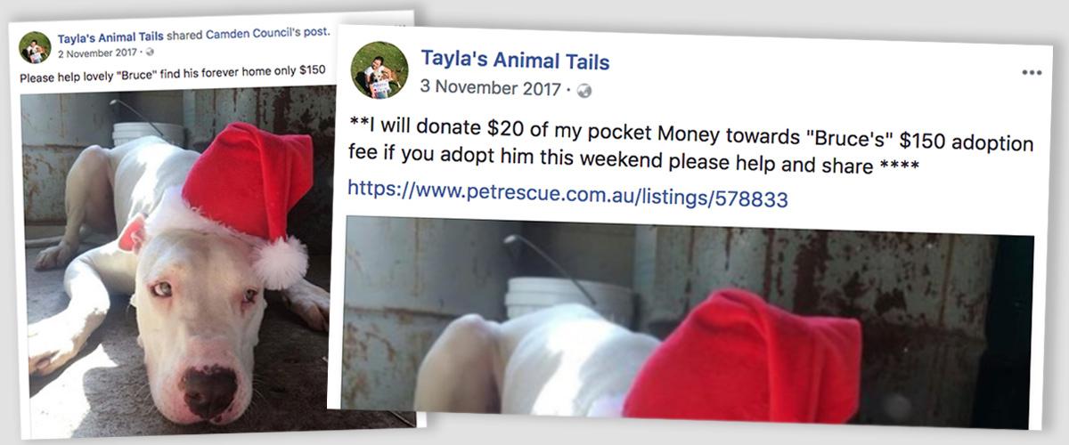 Tayla pledges pocket money for pound dogs