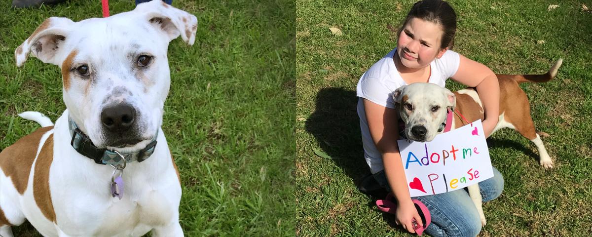 Tayla helps NSW pound pets