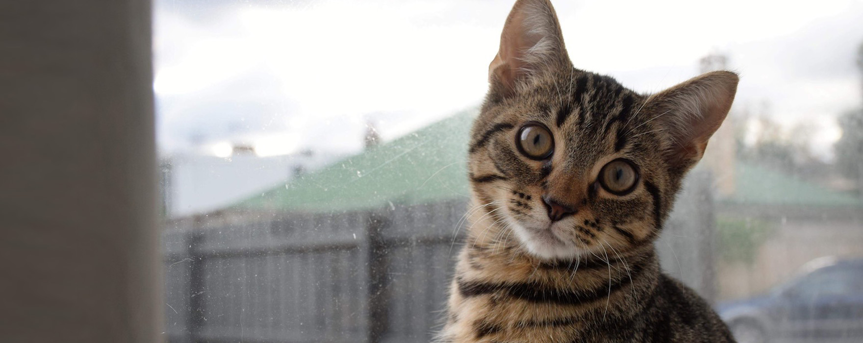 cat intake stats