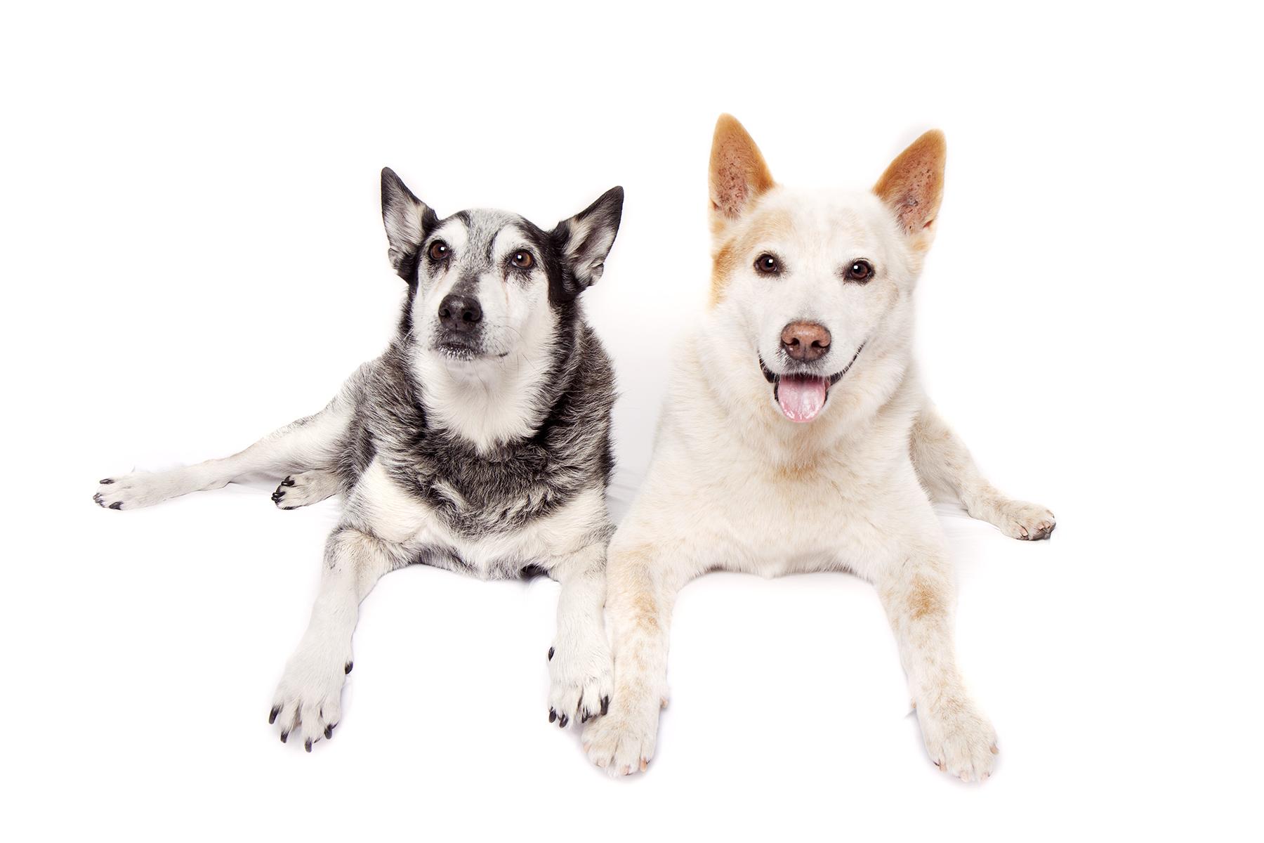 Two cute doggos