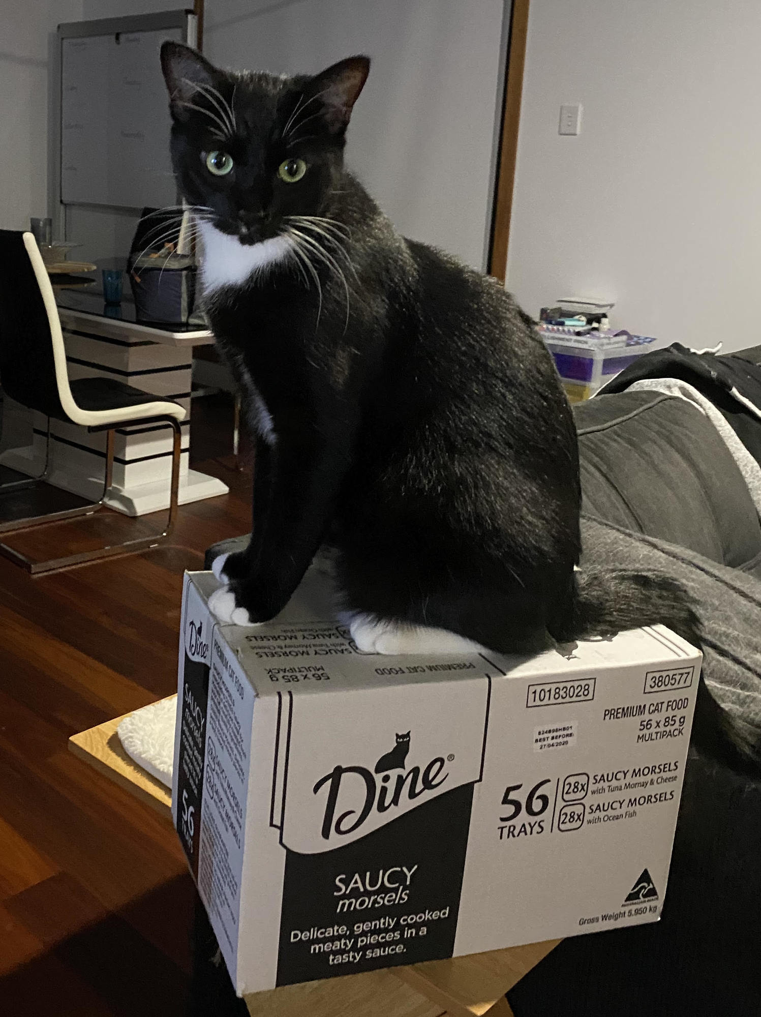 cat posing for the camera sitting on top of a carton of pet food