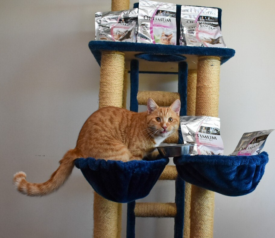 cat on a cat tower with cat food