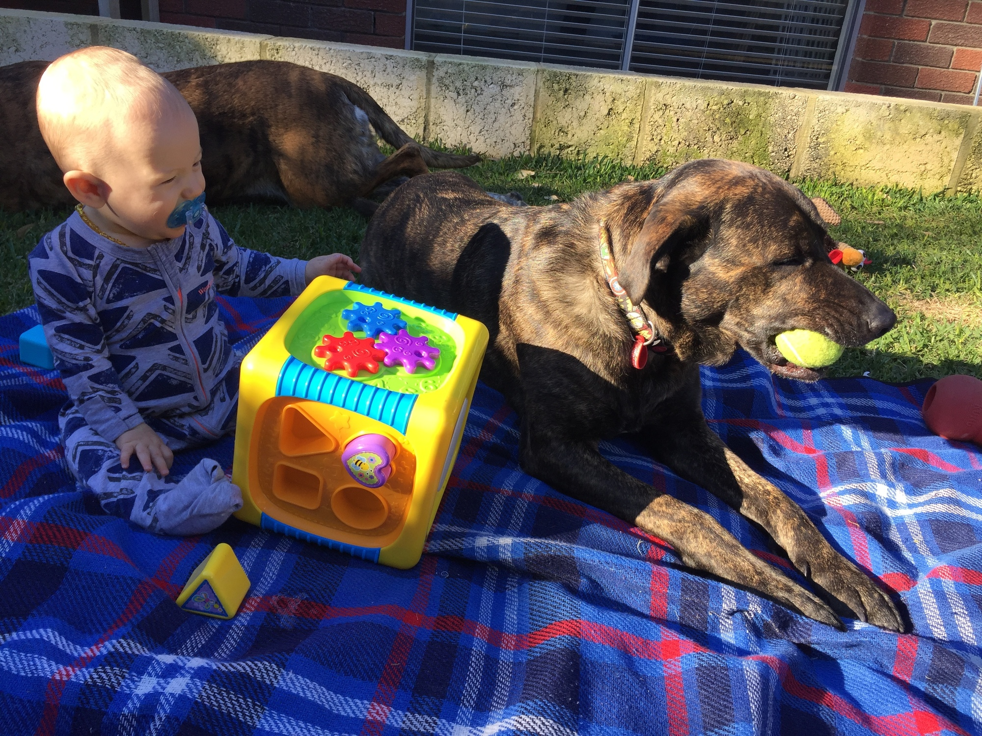 a baby sitting on a picnic rug with a dog