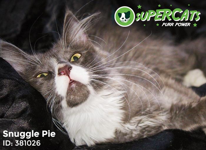 Snuggle-Pie