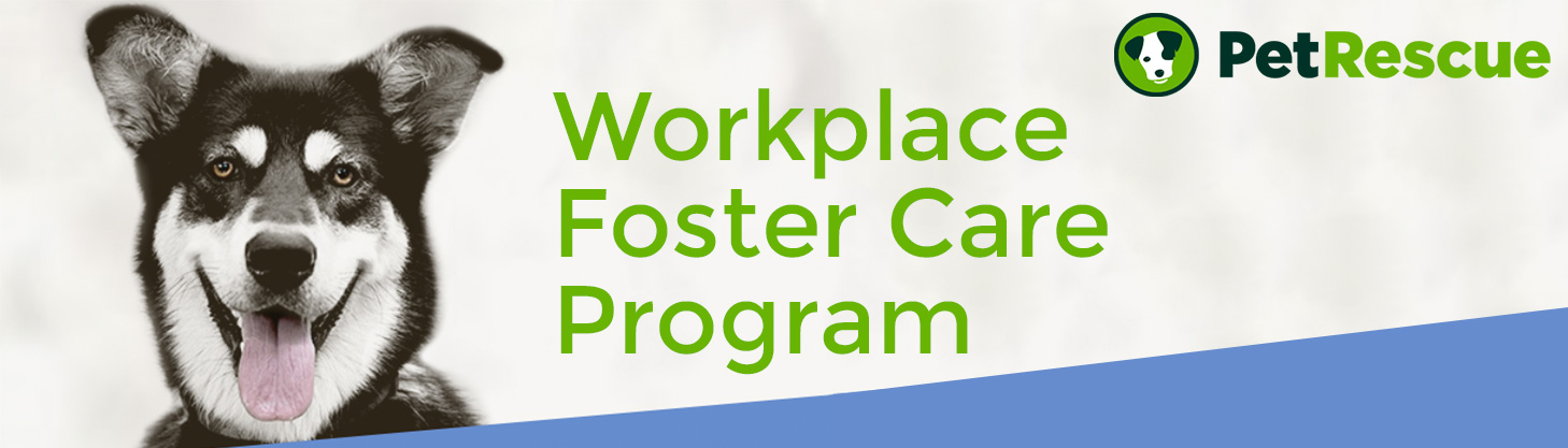 Workplace foster care