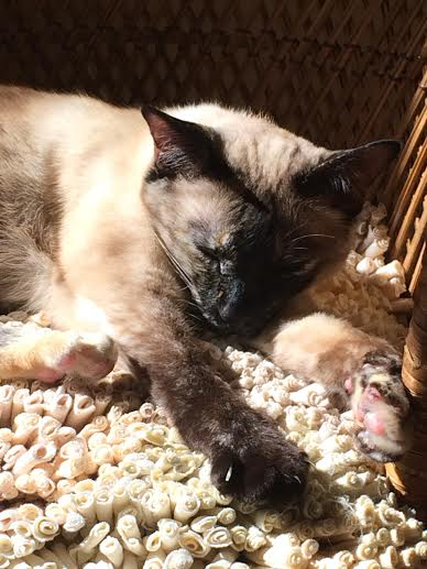 Indra snoozing in the sun