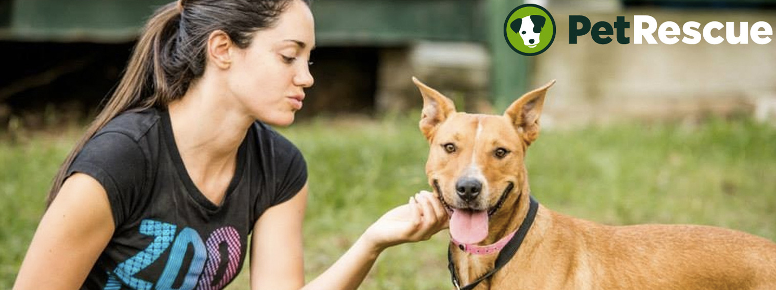 Discover-foster-caring