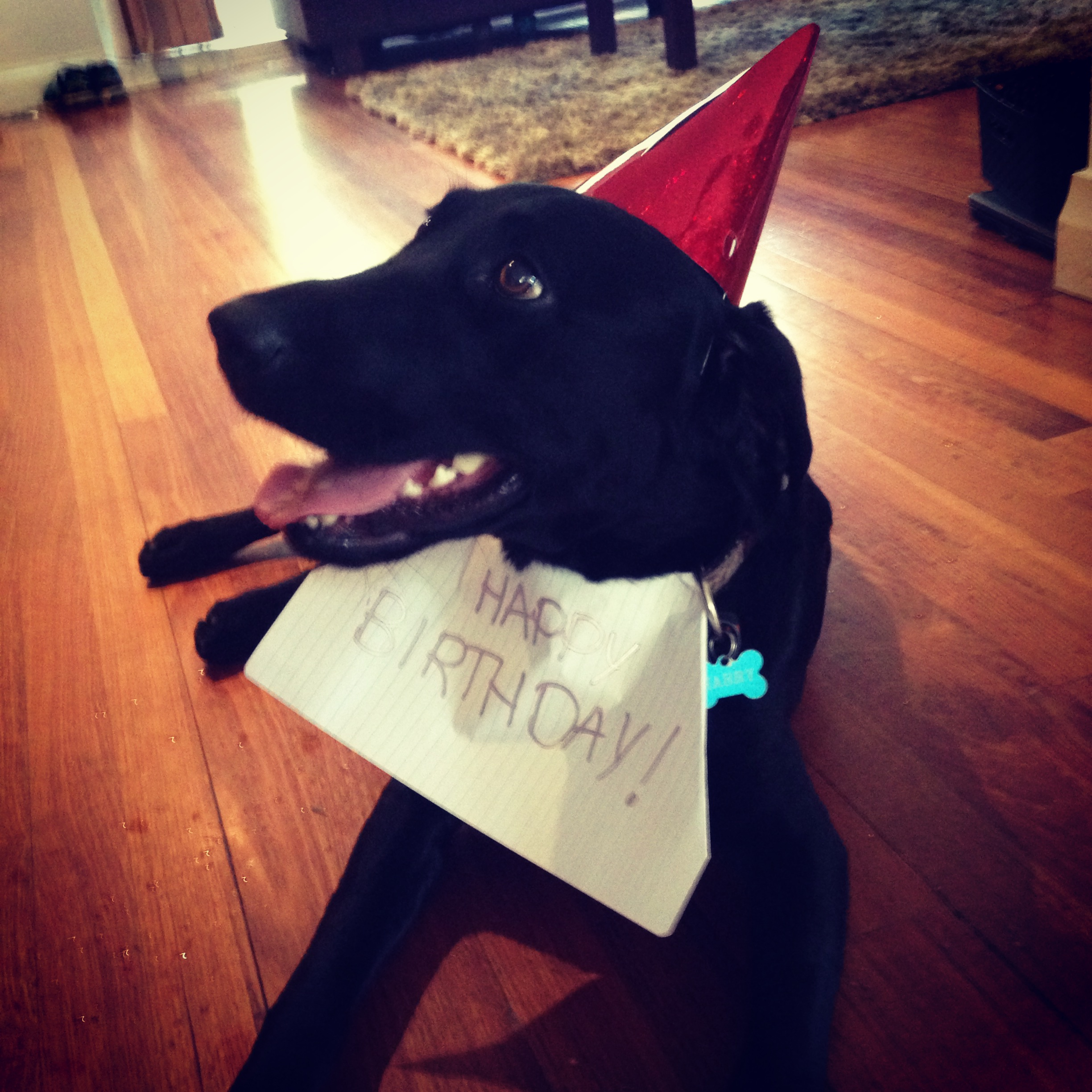 Harry celebrates his birthday