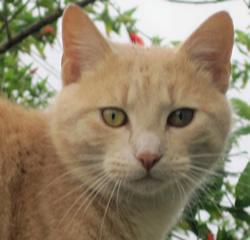 Snaps - hero cat