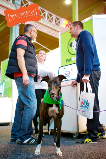 Dog Lovers Show 2013
