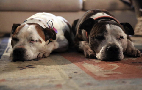 Sleeping Dogs PetRescue
