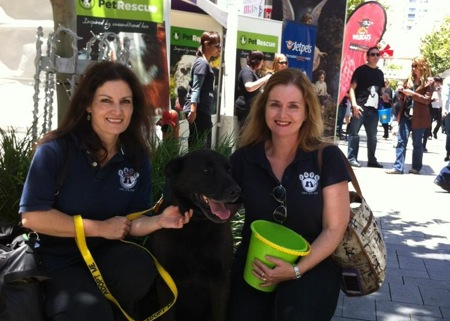 The SAFE Team at PetRescue's adoption event
