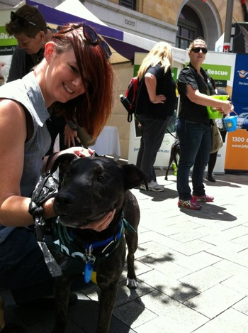 Staffy and Bully Breed Rescue WA
