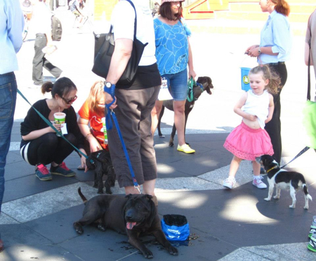 Kids and crowds at the PetRescue adoption event