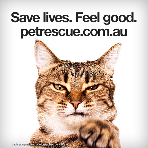 Cat - Save lives. Feel good.