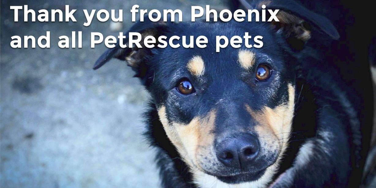 Thank you from Phoenix and all PetRescue pets
