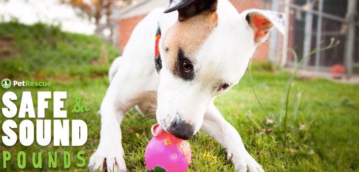 council pound pets for adoption PetRescue